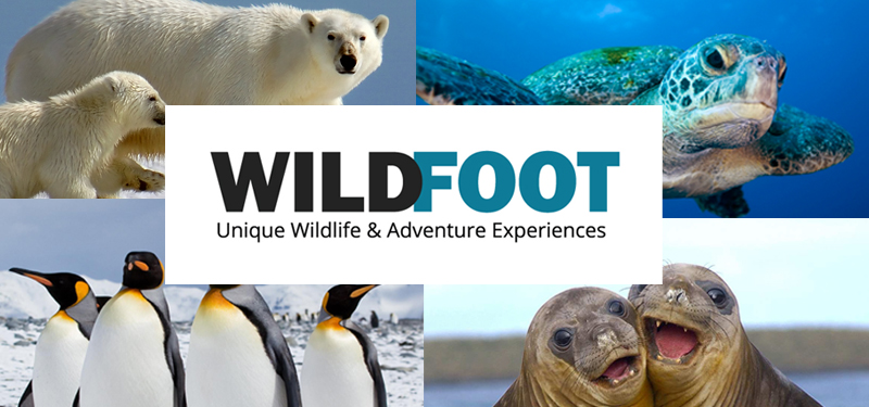 Wildfoot Travel