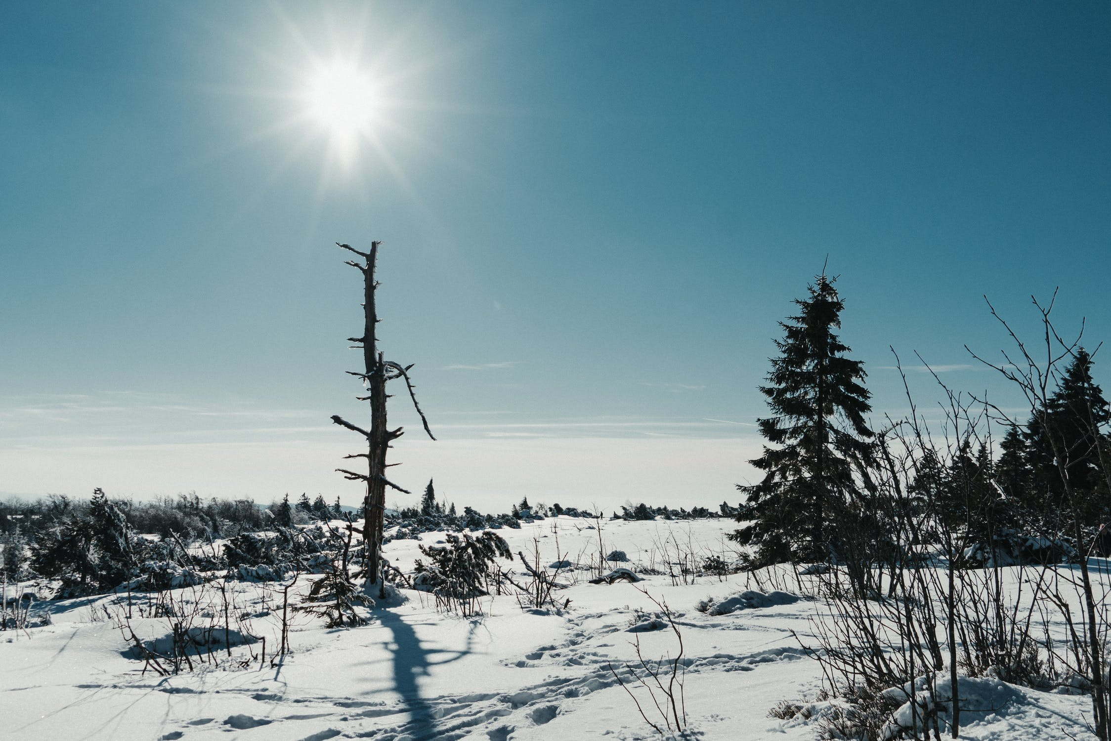 carbon emissions and the next ice age